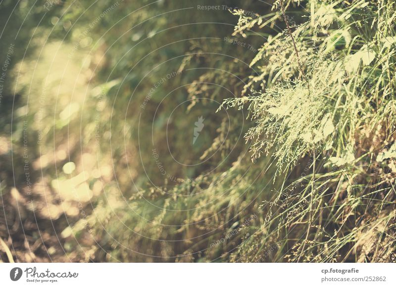 green Nature Plant Summer Beautiful weather Grass Foliage plant Garden Park Forest Green Day Shallow depth of field