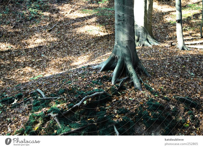 la forêt Old Green Tree Plant Black Forest Autumn Movement Lanes & trails Sadness Brown Earth Going Walking Large Natural