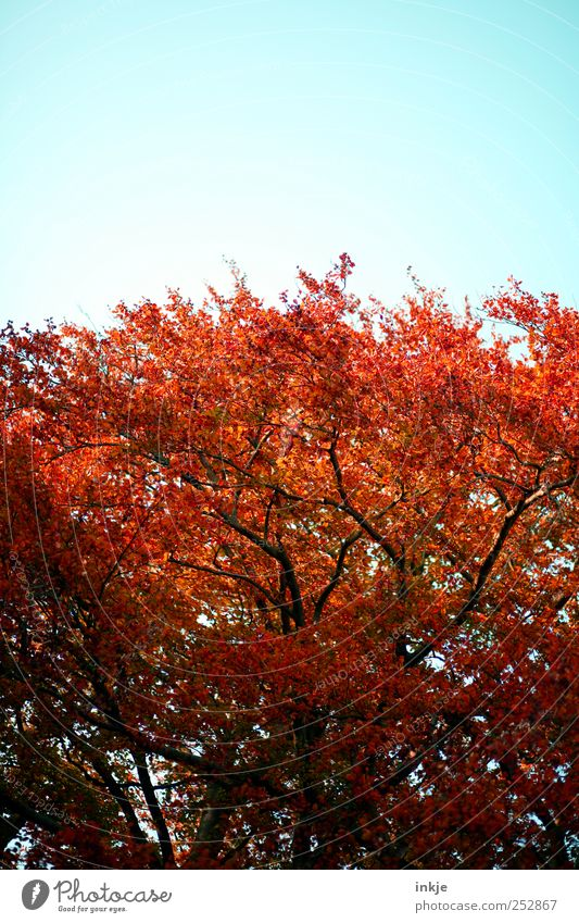 Sky Nature Beautiful Tree Red Plant Environment Autumn Above Garden Park Moody Wild Natural Large Tall