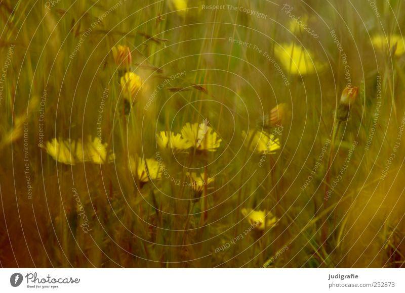 meadow Environment Nature Plant Summer Flower Grass Garden Meadow Growth Natural Yellow Colour photo Exterior shot Close-up Blur