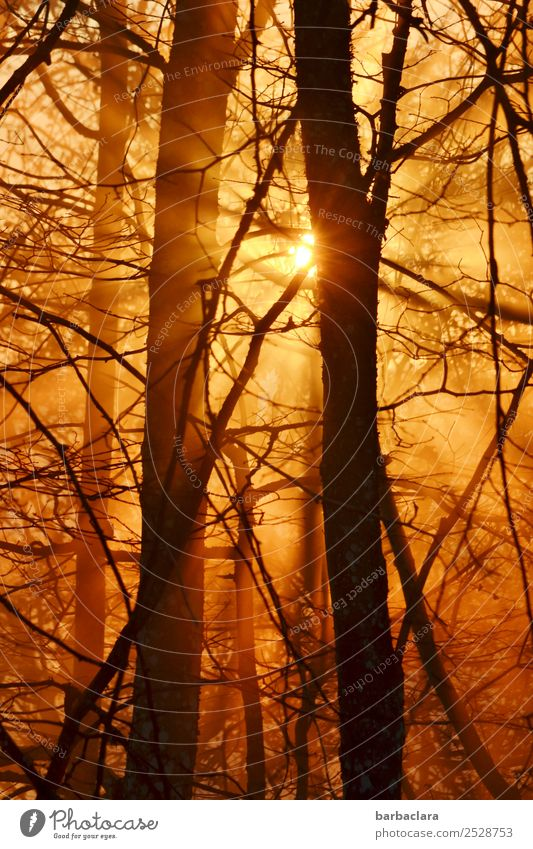 golden evening light in autumn Landscape Plant Elements Sun Autumn Beautiful weather Tree Bushes Twigs and branches Forest Illuminate Warmth Gold Emotions Moody