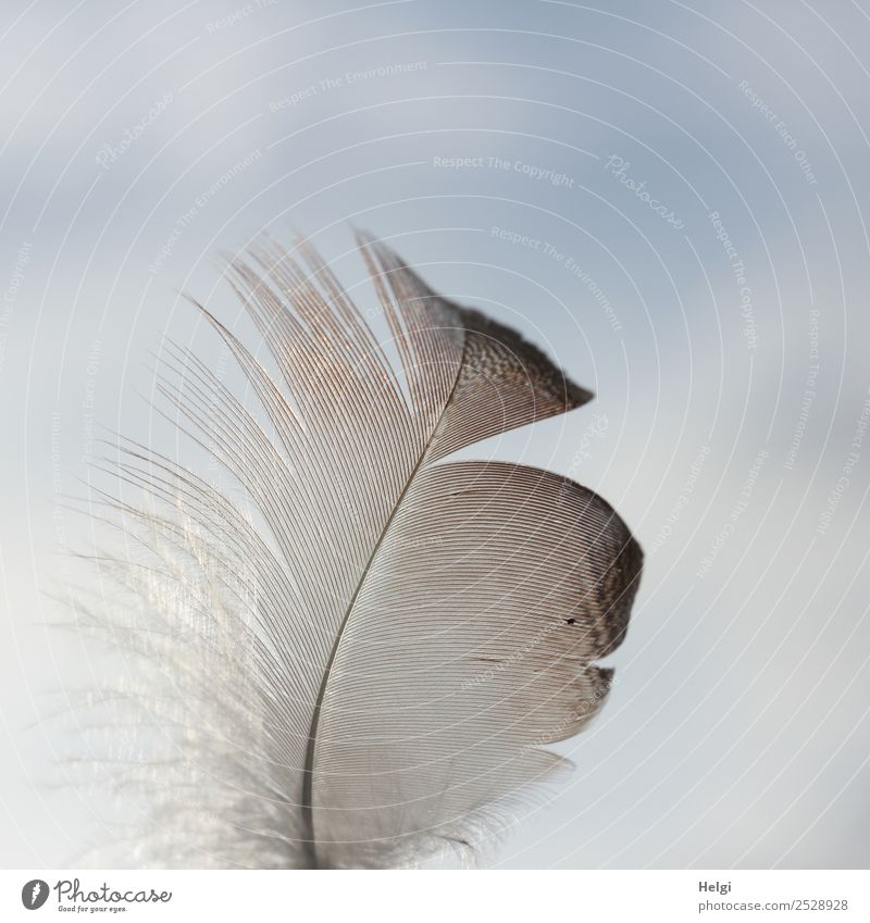 Close-up of a filigree feather in front of a blue-grey sky Nature Sky Feather Uniqueness Small natural Blue Brown Gray Esthetic Ease Delicate Easy Colour photo