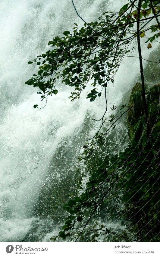 No waterfall Environment Nature Plant Water Waterfall Dark Loud Hydroelectric  power plant Torrents of water Plummeting To fall Roaring Wet Tree Branch Leaf