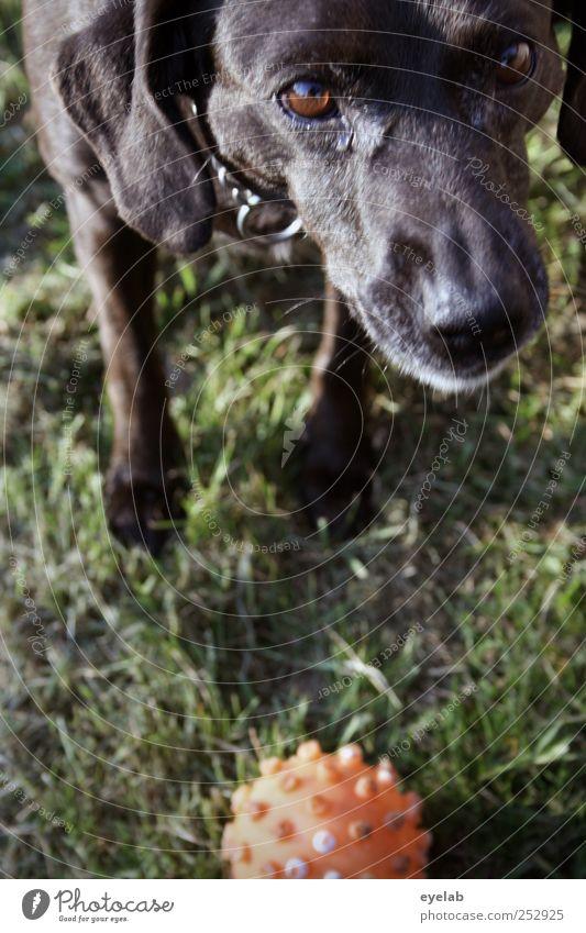 Get the stick! Nature Grass Garden Park Meadow Animal Pet Dog Animal face Pelt Paw 1 Smart Green Red Black Adventure Movement Energy Resolve Joy Friendship