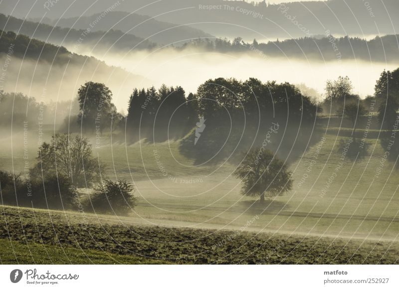 early morning mist Landscape Sunlight Autumn Beautiful weather Fog Tree Forest Deserted Relaxation Emotions Nature Colour photo Exterior shot Morning Shadow