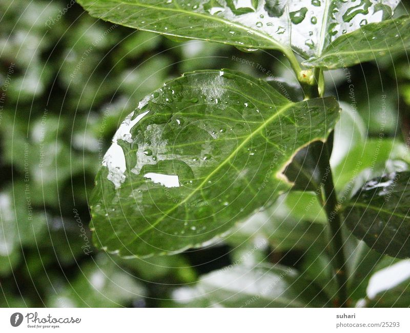 Nature Green Leaf Rain Drops of water Bushes