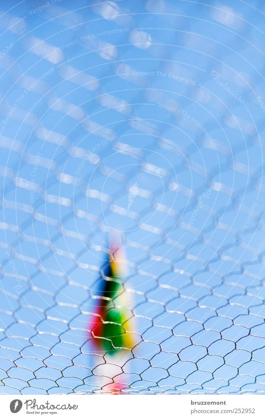 <><><><><><><> Gardening Scales Metal Emotions Fear Claustrophobia Crisis Stress Captured Wire netting Wire netting fence rabbit hutch Penitentiary Colour photo
