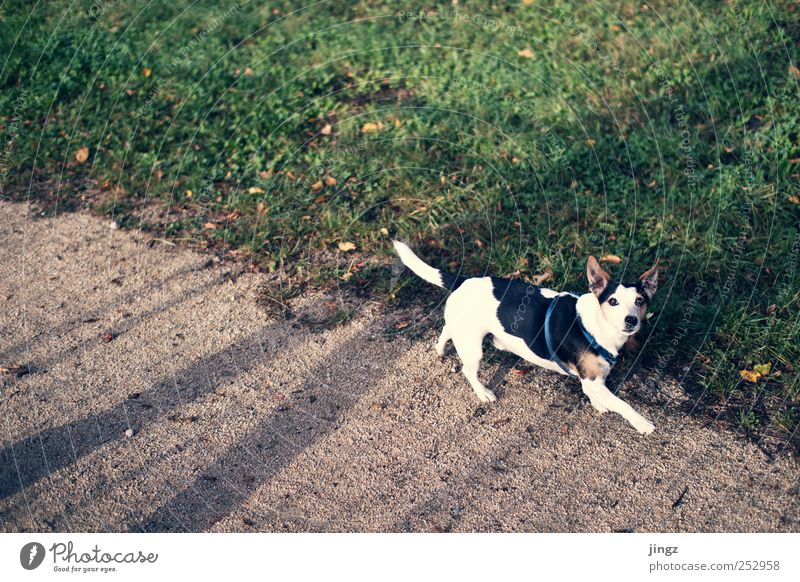 The dog Earth Grass Pet Dog 1 Animal Going Yellow Green Black White Shadow Colour photo Exterior shot Copy Space left Copy Space top Morning Light