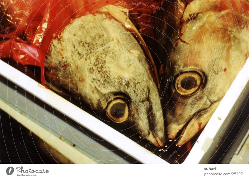 fish heads Fish head Fish mouth Obscure
