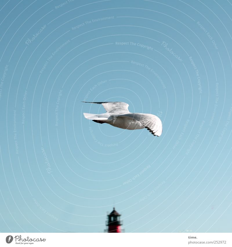 Sky White Red Animal Freedom Coast Bird Flying Wing Seagull Lighthouse
