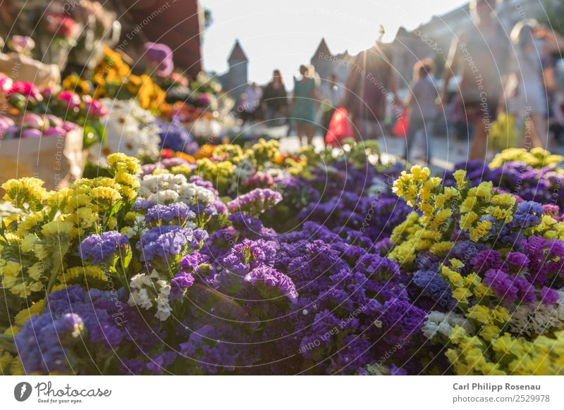 Flowers and people on the market Shopping Summer Summer vacation Sun Human being Crowd of people Plant Blossom Foliage plant Tallinn Estonia Town Capital city