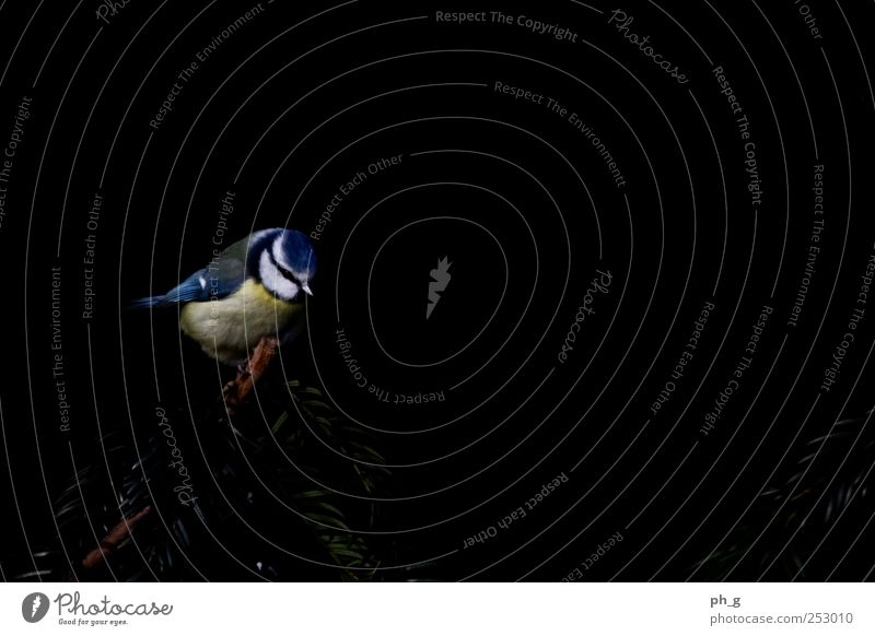 Blue White Plant Animal Black Yellow Small Bird Sit Wild animal Bushes Wing Observe Animal face Breathe Twig