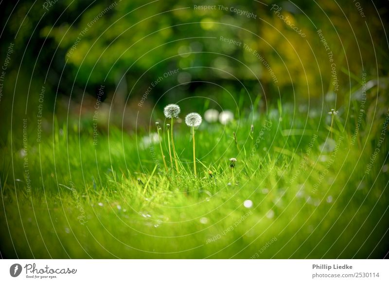 Nature Summer Plant Colour Green White Flower Black Life Background picture Environment Spring Blossom Natural Meadow Grass