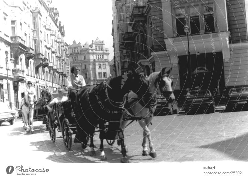 Prague Town Czech Republic Photo laboratory Horse Horse-drawn carriage Europe Vacation & Travel Black & white photo Street