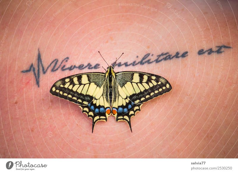 skin embellishment Skin Nature Animal Butterfly Swallowtail 1 Esthetic Exceptional Beautiful Tattoo Figure of speech Colour photo Exterior shot Copy Space top
