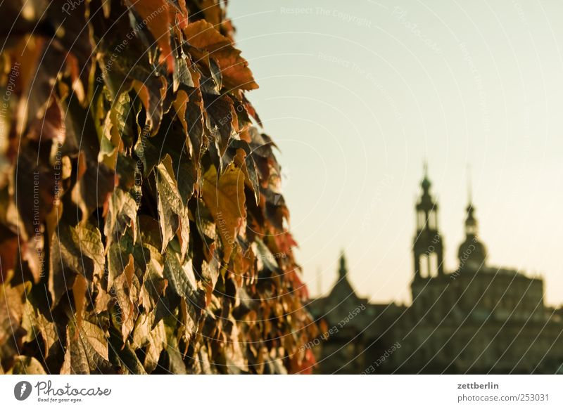 Autumn in Dresden Environment Nature Plant Sky Beautiful weather Town Capital city Downtown Old town Skyline House (Residential Structure) Church Dome Castle