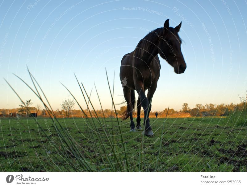 Sky Nature Plant Animal Meadow Autumn Environment Grass Earth Large Natural Horse Elements Near Pelt Cloudless sky