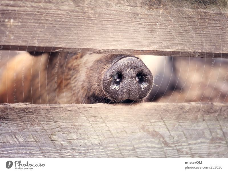 Sniff it. Park Esthetic Nose Nostril Coati Tip of the nose Nasal hair Odor Enclosure Swine Swinishness Pig head Pig's snout To be lucky Happy Good luck charm