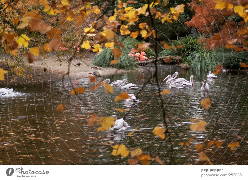 Nature Water Tree Plant Leaf Animal Calm Yellow Autumn Environment Landscape Garden Park Brown Bird Contentment