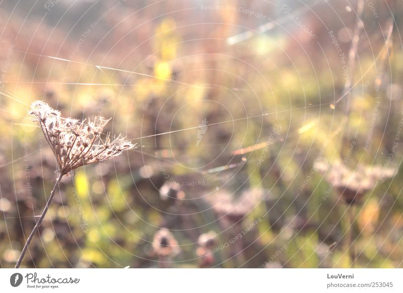 Nature Plant Landscape Flower Leaf Environment Meadow Autumn Grass Bushes Beautiful weather Warm-heartedness Serene Spider Foliage plant Spider's web