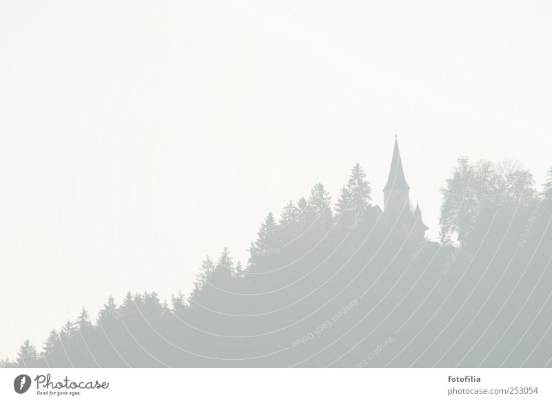 All Saints' Day Landscape Bad weather Fog Tree Forest Austria Church Church spire Subdued colour Deserted Copy Space left Copy Space right Copy Space top