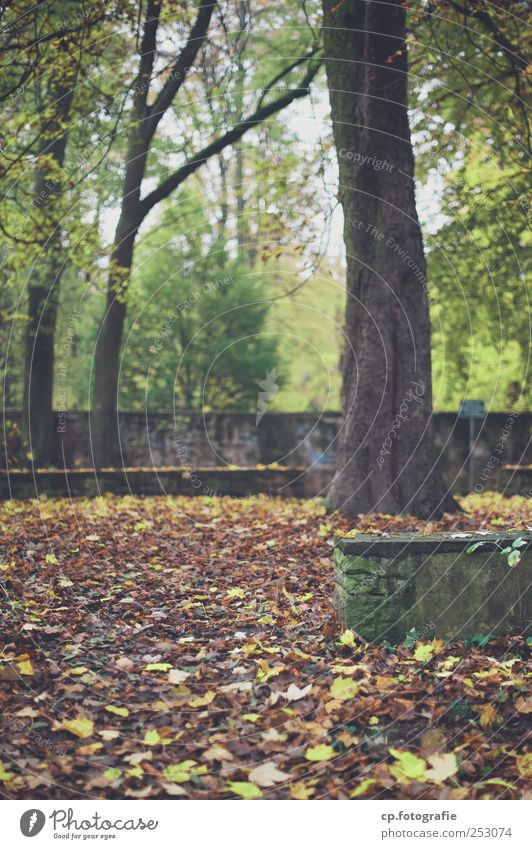FALLout Plant Autumn Weather Tree Leaf Foliage plant Park Natural Wall (barrier) Day Shallow depth of field