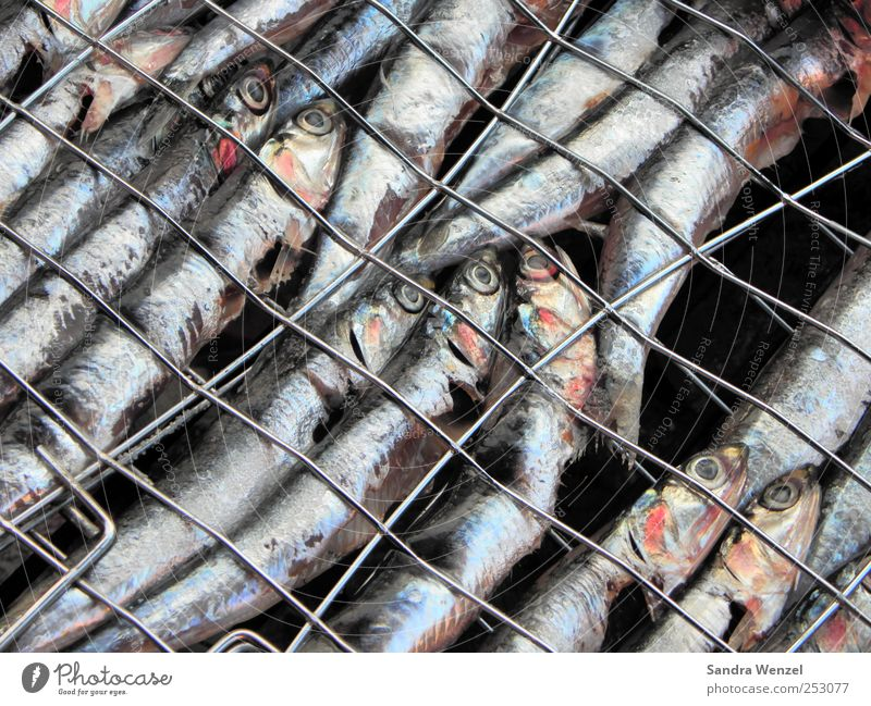 grilled sardines Food Fish Seafood Nutrition Lunch Dinner Finger food Sushi Sardinia grill grid Animal Scales Aquarium Group of animals Flock Pack