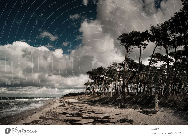 Darß in the darkness Environment Nature Landscape Plant Water Sky Clouds Horizon Autumn Beautiful weather Tree Bushes Wind cripple Forest Waves Coast Beach