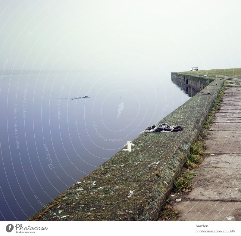 instant Landscape Fog Baltic Sea Animal 1 Stone Concrete Water Hunting Blue Brown wharf Bench tranquillity Still Life Subdued colour Deserted Copy Space left