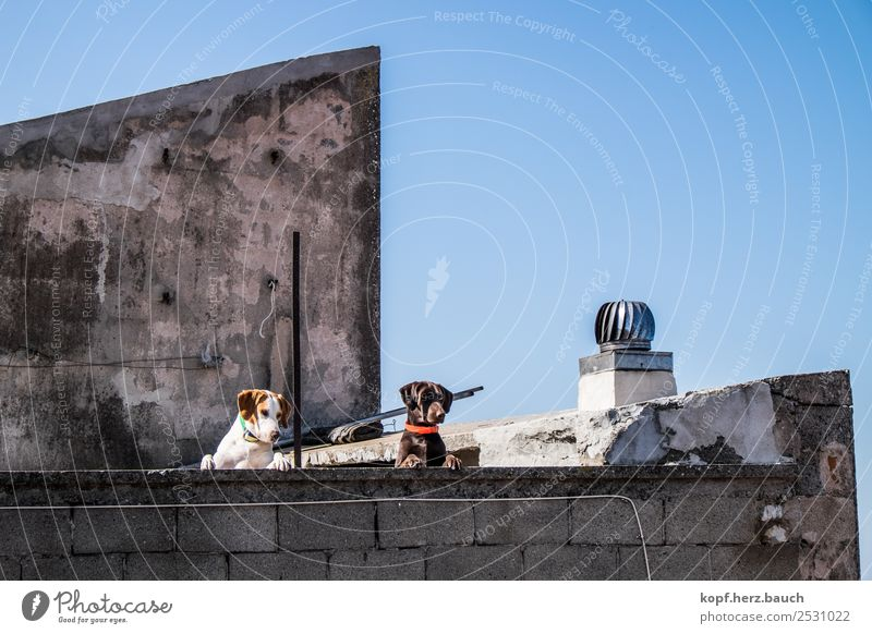 On the wall, on the lurk Old town House (Residential Structure) Roof Dog 2 Animal Observe Think Looking Cool (slang) Together Funny Curiosity Above Town Wild