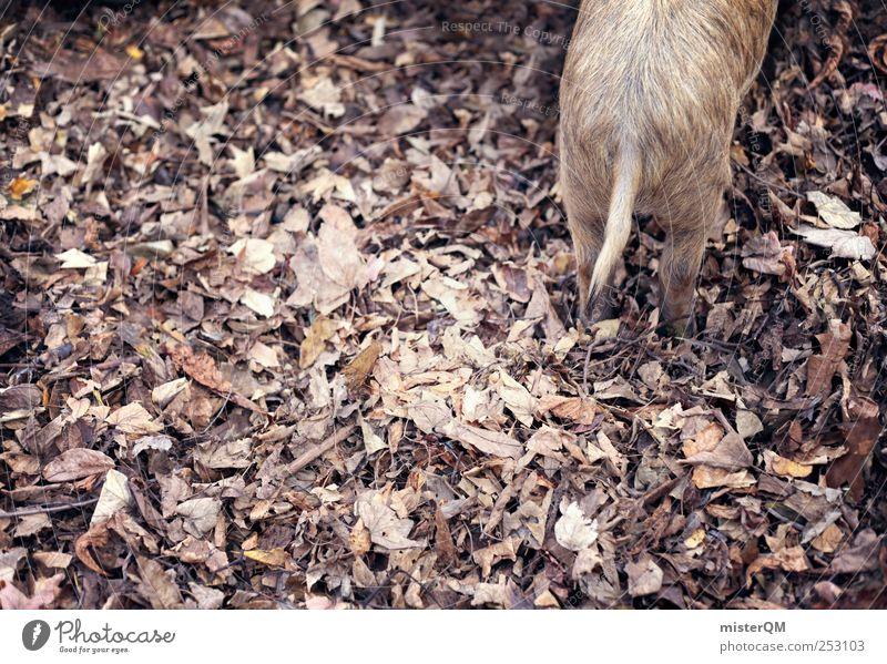 Nature Beautiful Leaf Environment Landscape Autumn Small Esthetic Pelt Zoo Autumn leaves Swine Autumnal Cattle breeding Autumnal colours Early fall