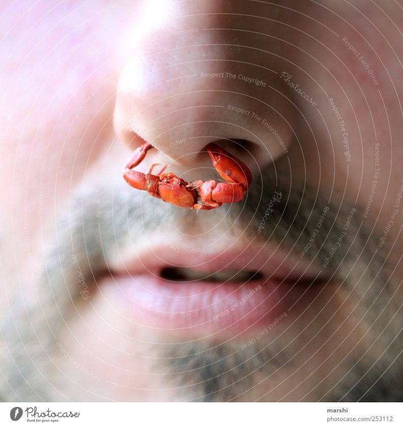 The nose ring for the man Human being Masculine Man Adults Skin Face Nose Mouth Lips 1 Animal Red Nose ring Jewellery Cancer clasp To hold on Claw Pain Funny