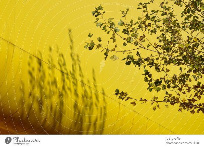 Nature Tree Plant Yellow Environment Architecture Building Natural Manmade structures Hannover