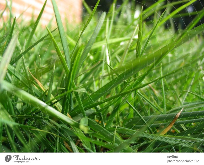 Green Grass Spring Growth Near Floor covering Maturing time