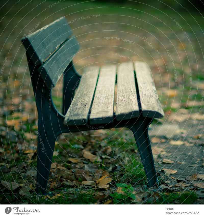 bank profile Autumn Park Deserted Old Brown Green Black Bench Wooden bench Autumnal Empty Colour photo Subdued colour Exterior shot Day Contrast