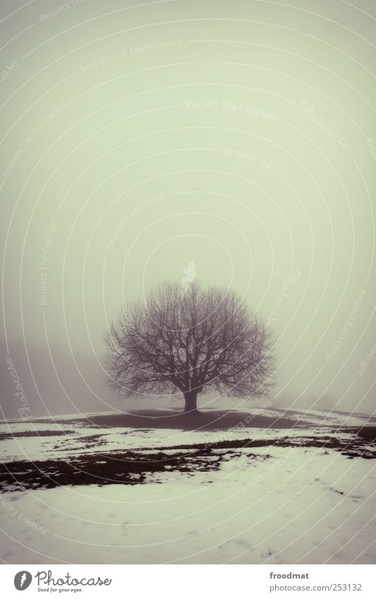 Nature Tree Winter Calm Loneliness Cold Meadow Snow Environment Landscape Ice Power Fog Growth Gloomy Change
