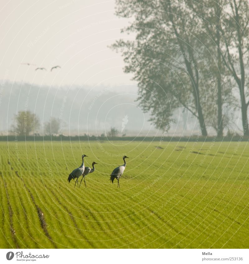 Nature Tree Animal Freedom Environment Landscape Bright Bird Field Going Natural Stand Crane Migratory bird