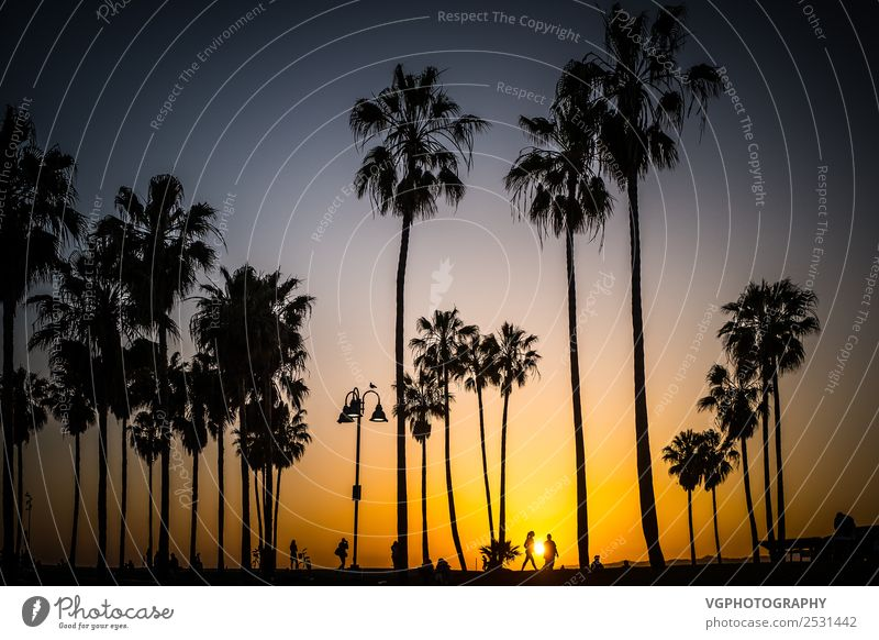 Sunset in Venice Sky Vacation & Travel Town Beautiful Tree Joy Beach Street Warmth Spring Coast Playing Hiking Park Bicycle