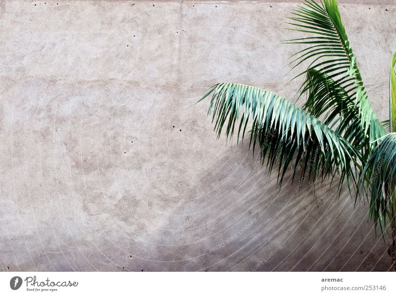 All Inclusive Plant Foliage plant Palm tree Palm frond Wall (barrier) Wall (building) Facade Exotic Vacation & Travel Colour photo Subdued colour Exterior shot