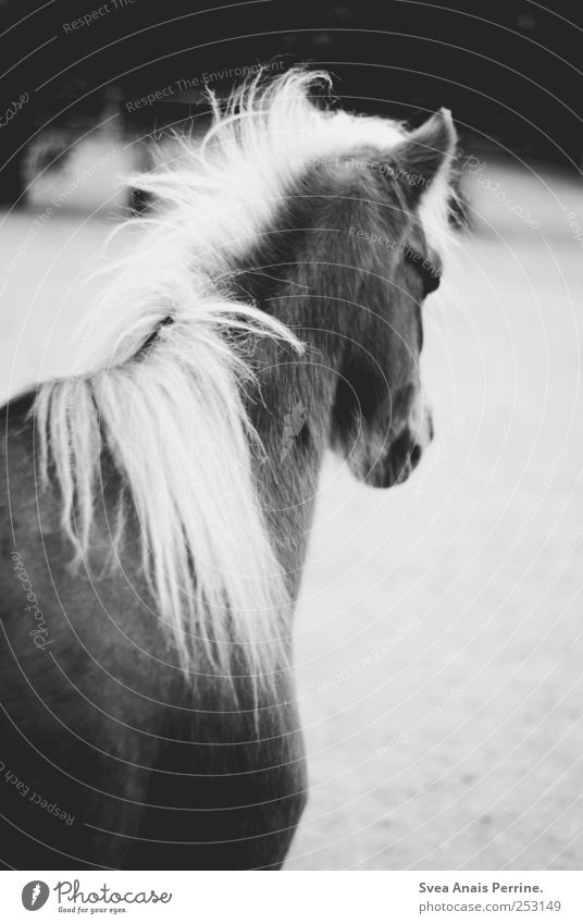 hophop. Zoo Wild animal Horse Horse's head 1 Animal Sadness Black & white photo Exterior shot Motion blur Animal portrait