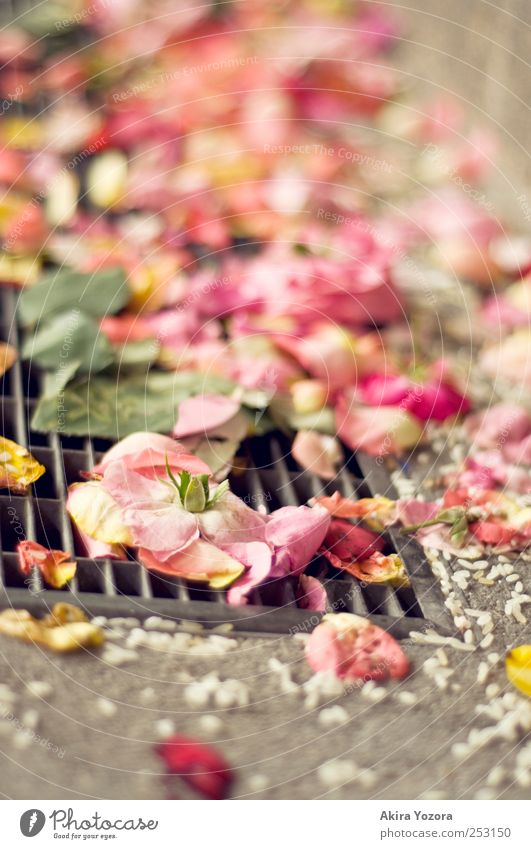wedding remains Flower Rose Leaf Blossom Stone Concrete Metal Lie Yellow Green Pink White Romance Rice Colour photo Exterior shot Close-up Detail Deserted