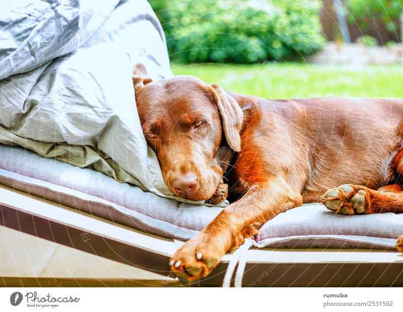 Just get some rest. Well-being Relaxation Summer vacation Beautiful weather Garden Pet Dog Paw To enjoy Lie Cool (slang) Friendliness Cuddly Cute Brown Green