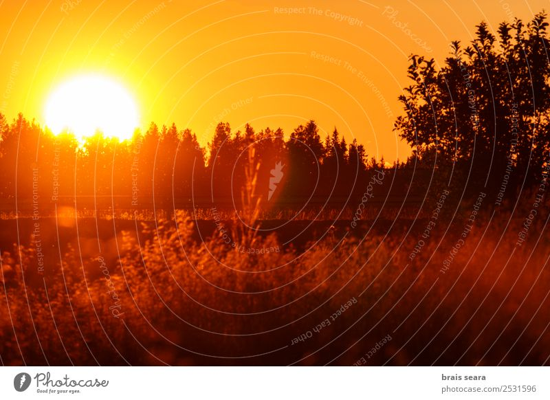 Sunset over forest Beautiful Vacation & Travel Tourism Trip Summer Mountain Solar Power Environment Nature Landscape Earth Sky Horizon Autumn Tree Park Forest