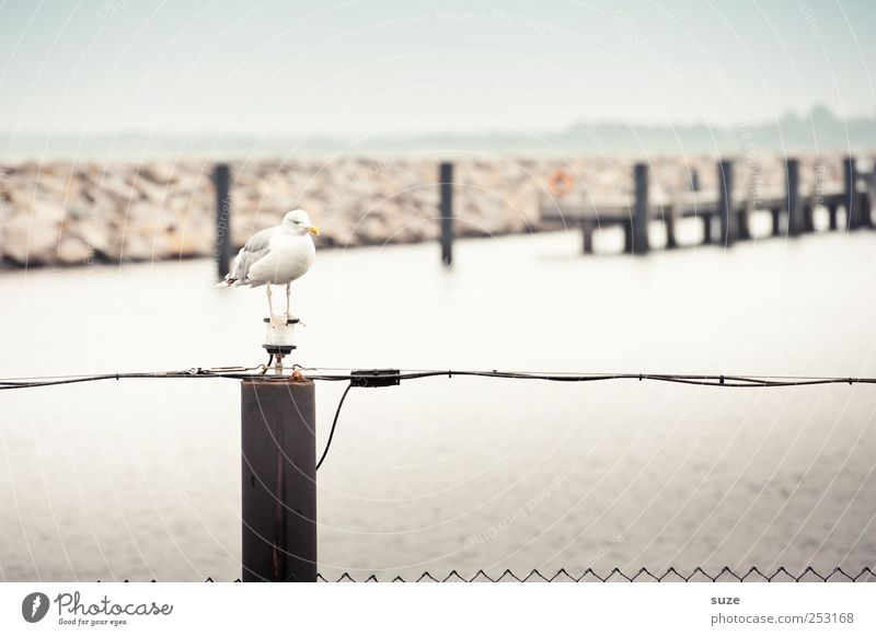 Sky Ocean Animal Environment Coast Horizon Bird Wild animal Wait Harbour Fence Seagull Footbridge Jetty Cloudless sky