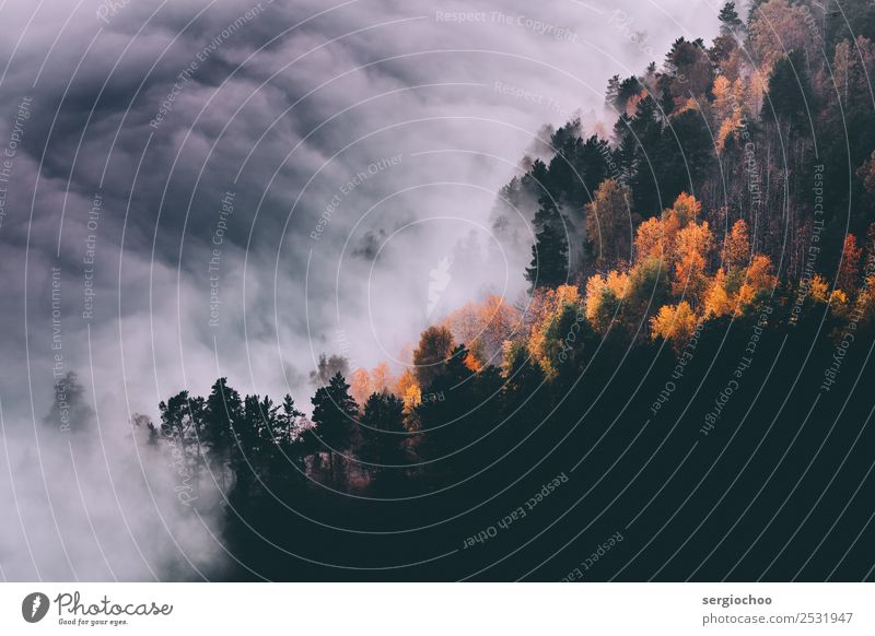 autumn fall Nature Clouds Storm clouds Autumn Climate change Bad weather Fog Tree Forest Hill Mountain Movement Vacation & Travel Gigantic Beautiful Uniqueness