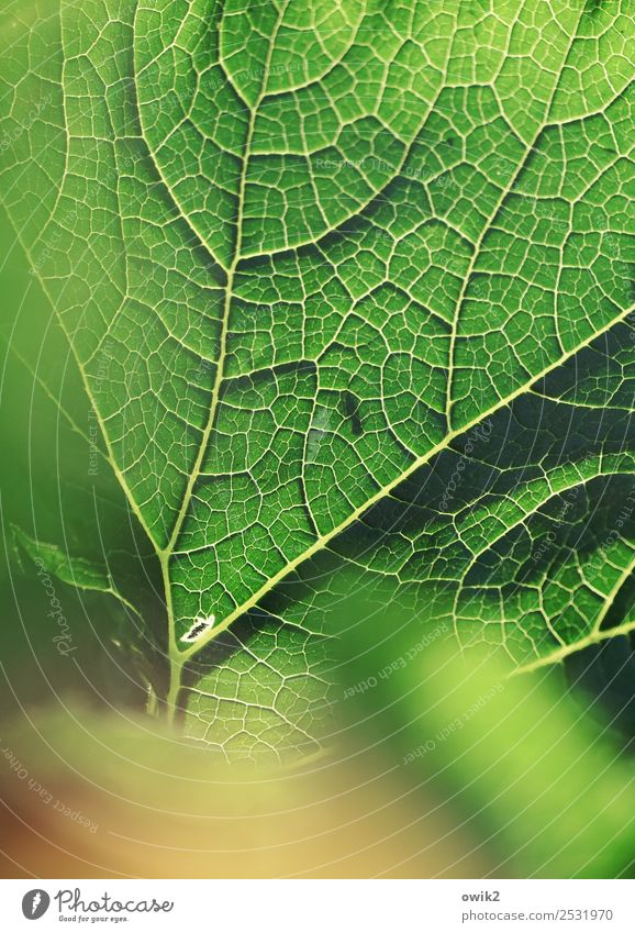 fine rib Environment Nature Plant Leaf Agricultural crop Zucchini Rachis Thin Authentic Near Natural Green Orange Design Life Bright Colours Bright green Fine