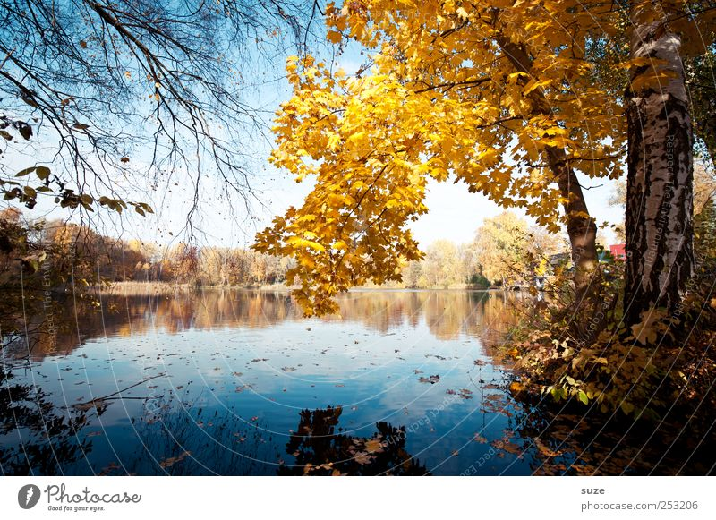 Nature Water Beautiful Tree Leaf Yellow Autumn Environment Landscape Lake Idyll Lakeside Treetop Twig Autumn leaves November