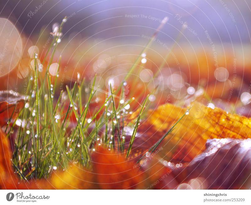 Nature Leaf Calm Meadow Autumn Garden Earth Glittering Beginning Drops of water Joie de vivre (Vitality) Blade of grass Dew Magic Brilliant Glimmer
