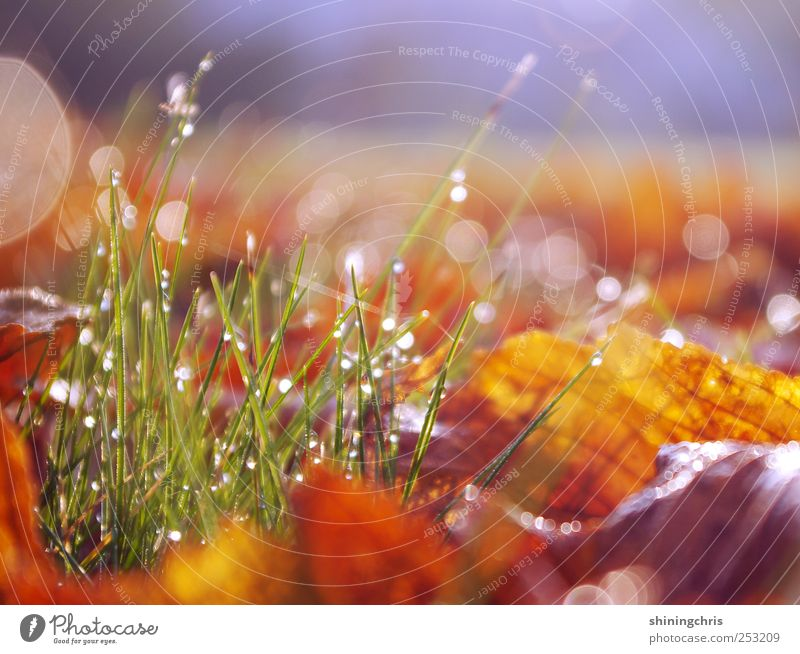 Nature Leaf Calm Meadow Autumn Garden Earth Glittering Beginning Drops of water Joie de vivre (Vitality) Blade of grass Dew Magic Brilliant Glimmer