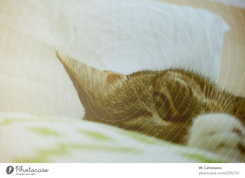 Sleep and Love you... Pet Cat Animal face 1 Friendliness Green Emotions Happy Domestic cat Bed Colour photo Interior shot Deserted Morning Central perspective